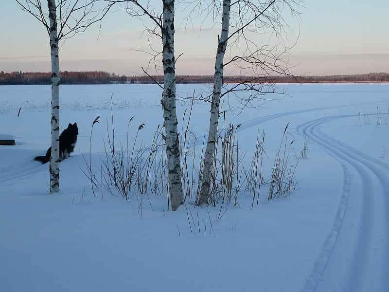 latu_skitrail_talvi_winter