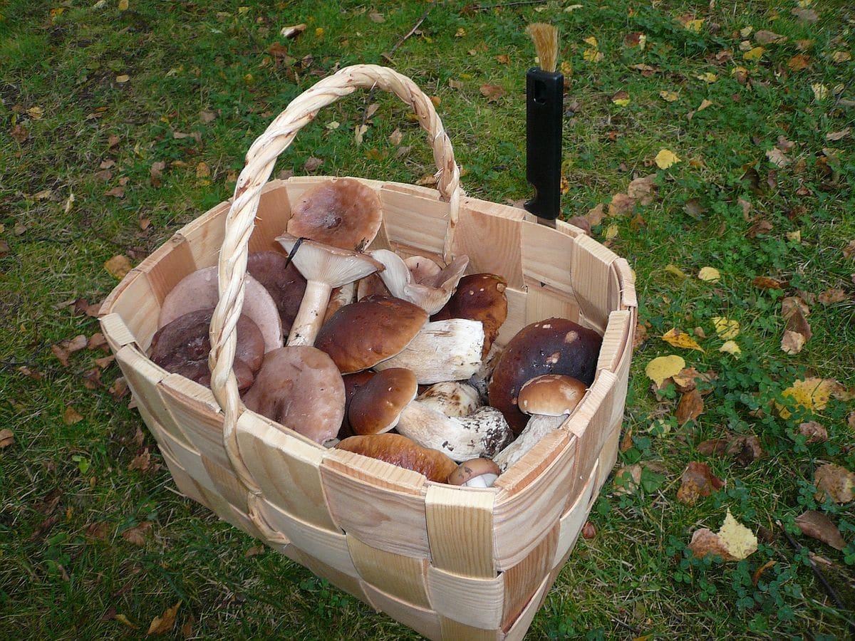 sienet_mushrooms_lomamokkila